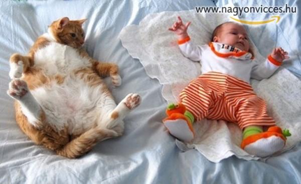Tiszta macska ez a gyerek :D