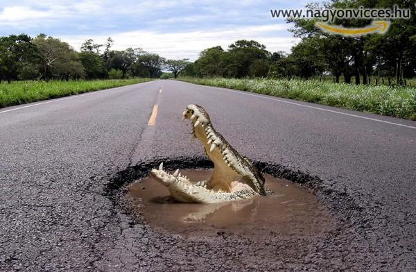 Vigyázz az aszfaltos krokodilokkal