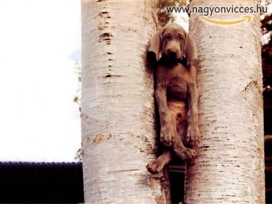 Vizsla a fákközt