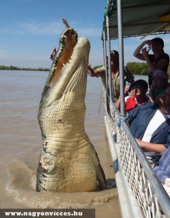 Mérges krokodil