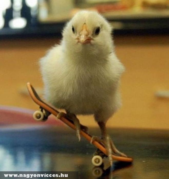 Deszkás csirke