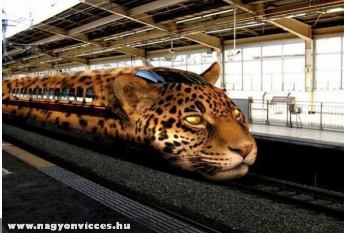 Párduc vonat