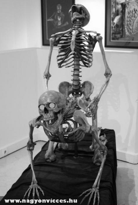 Még a csontvázak is csinálják