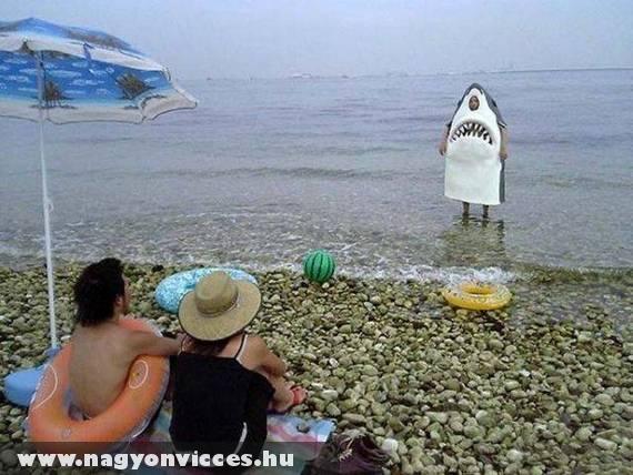 Cápák ki a partra!