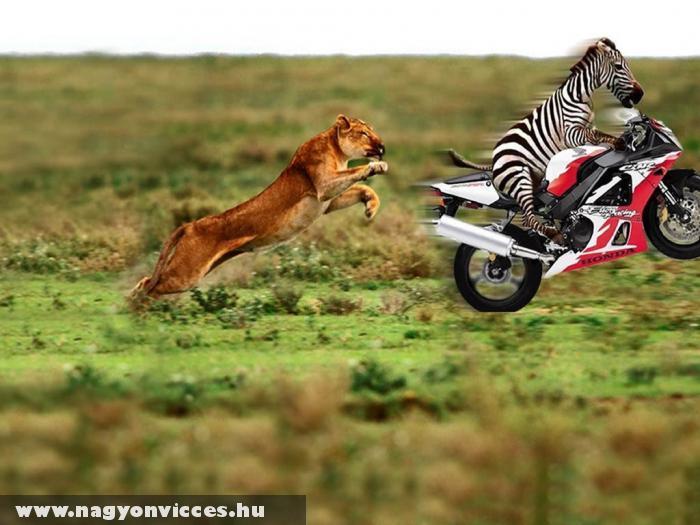 Szafari Akció