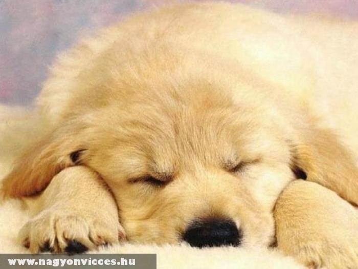 Álmos vagyok