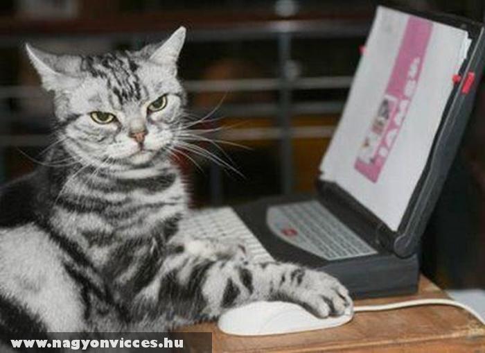 Macska táp rendelés
