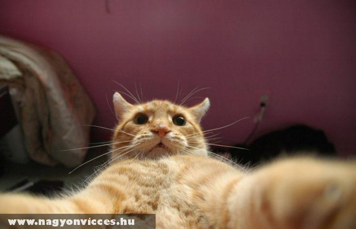 Egy cica profilképe
