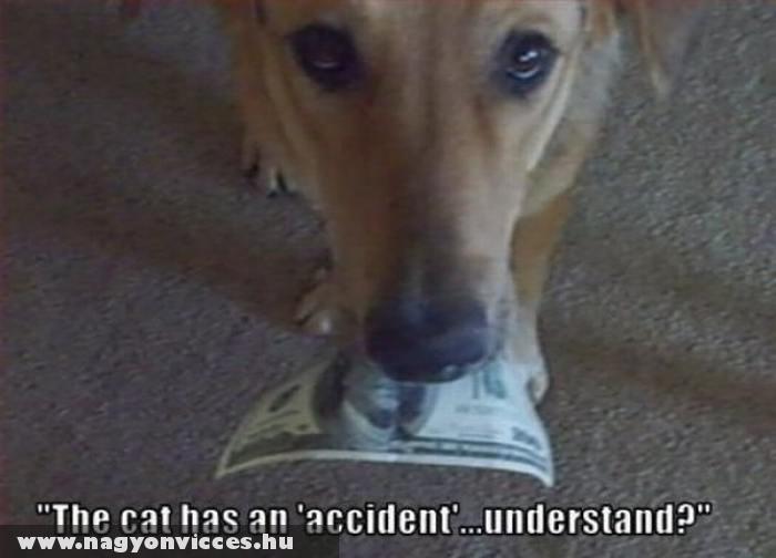 A cicát baleset érte. Ugye?!