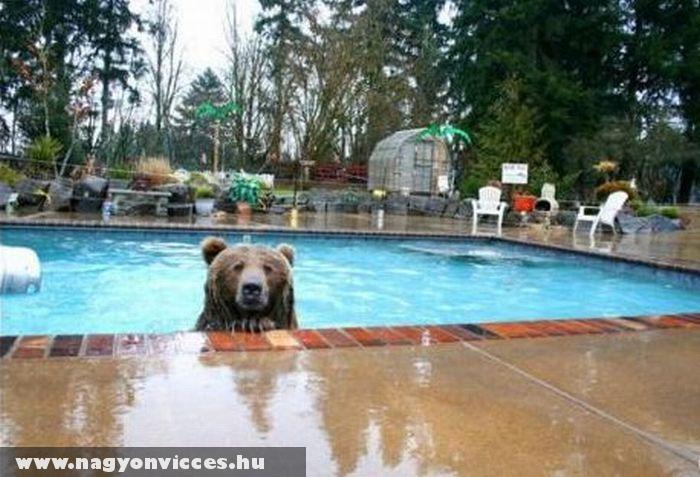 Családtag lett a medve