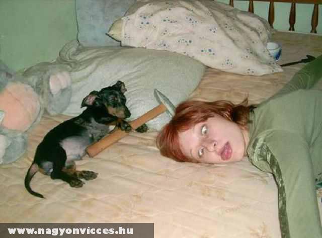 A kalapácsos gyilkos kutya lecsapott