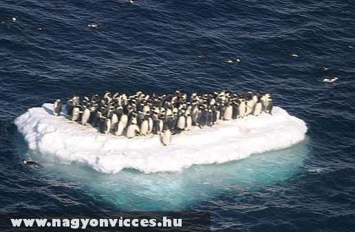 Pingvin / állatmentés