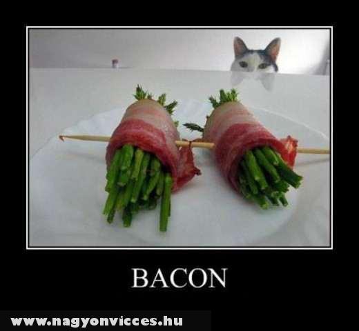 Cat & Bacon