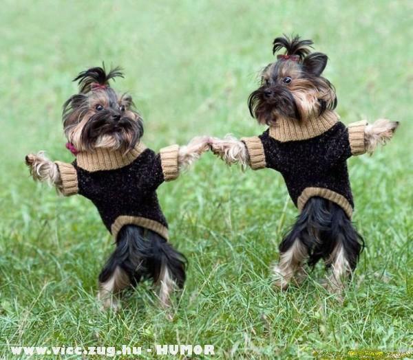 táncoló kutyusok