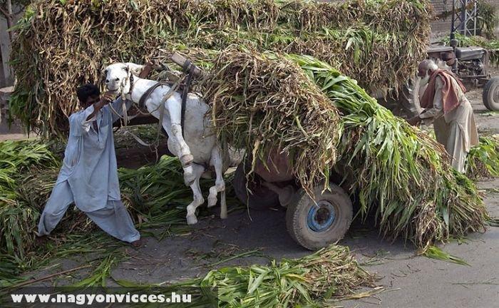 Sokat akar a gazdi, nem bírja a szamara :)