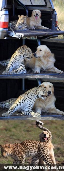 Kutya macska barátság