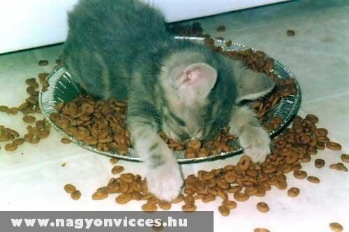 Elfáradt a kiscica