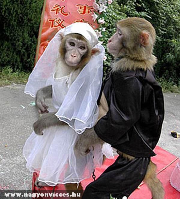 Majom menyasszony a majom võlegénnyel :)