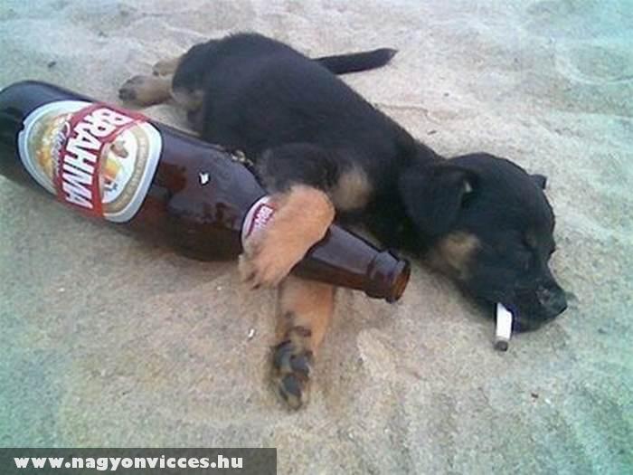 Részeg kutya