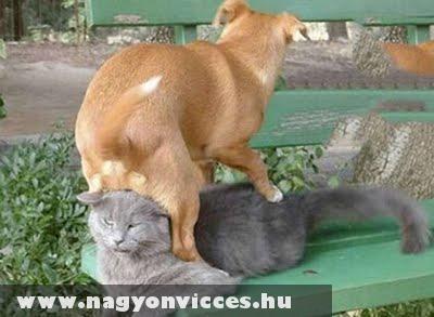 Hülye kutyák...
