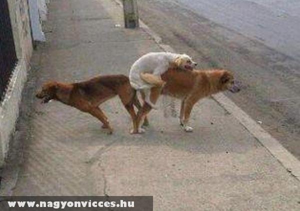 Kutya szex
