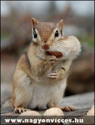 Mohó mókus