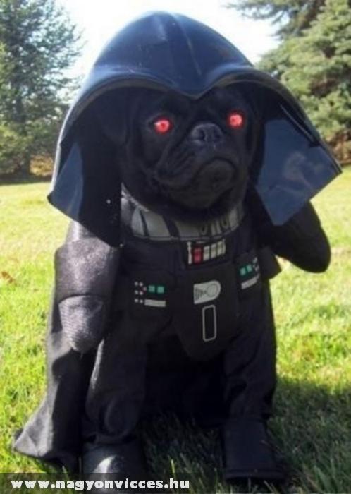 Darth Vader kutyus