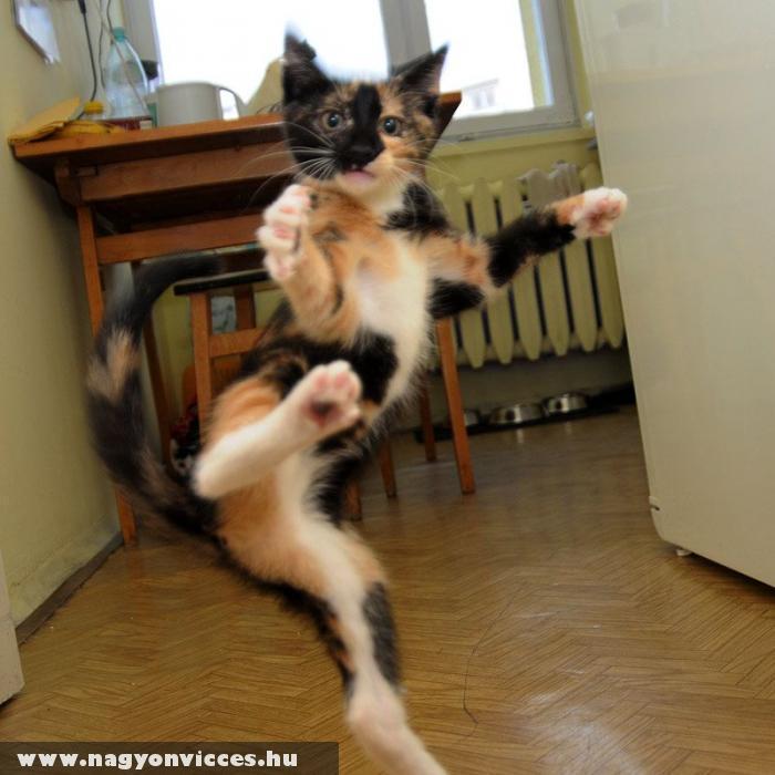 Karatézó macska