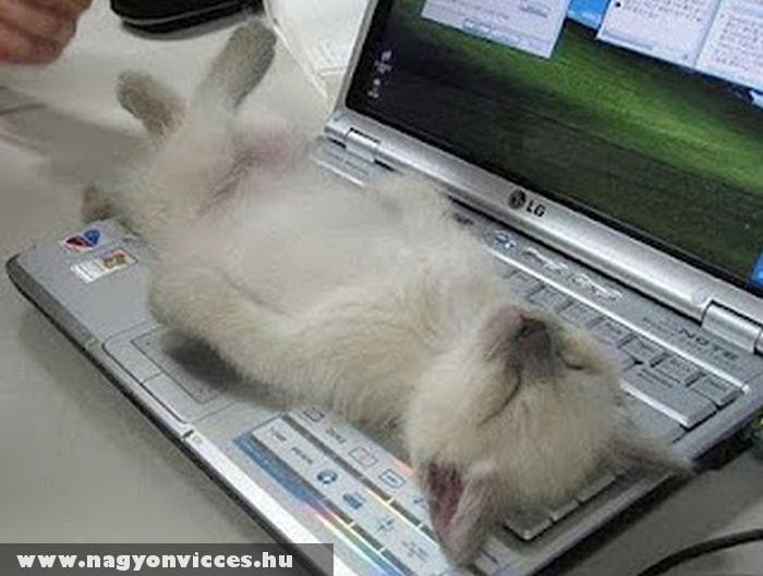Pihenés laptopon