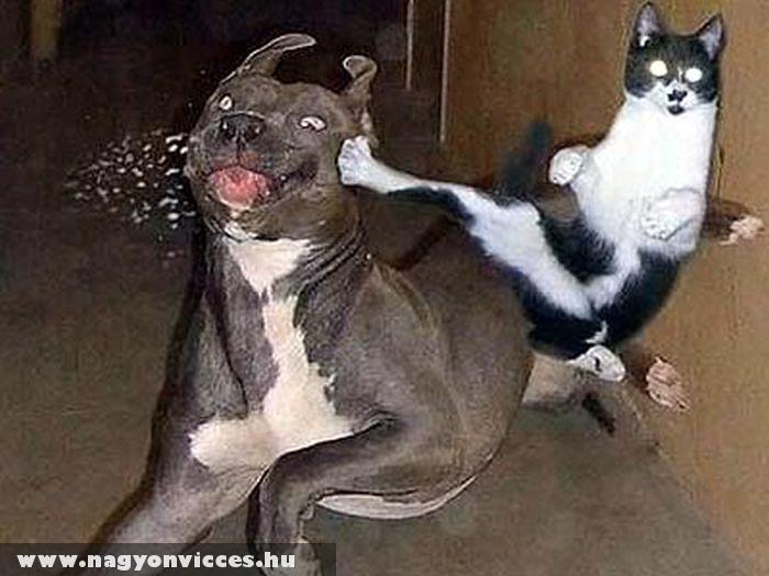 Kutyapüfölõ macska