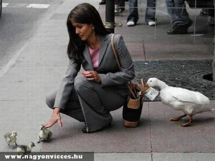 Zsebtolvaj állatok és a beetetés :D
