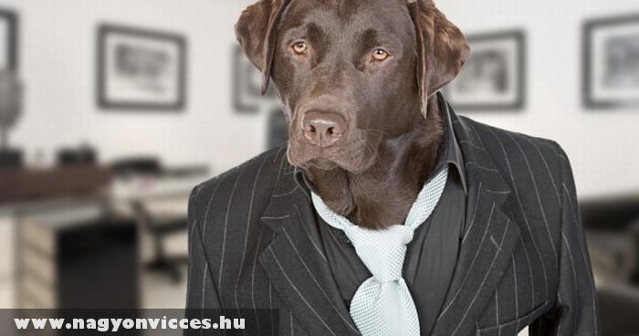 Öltönyös kutya