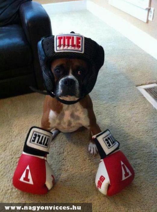 Boxoló kutyus