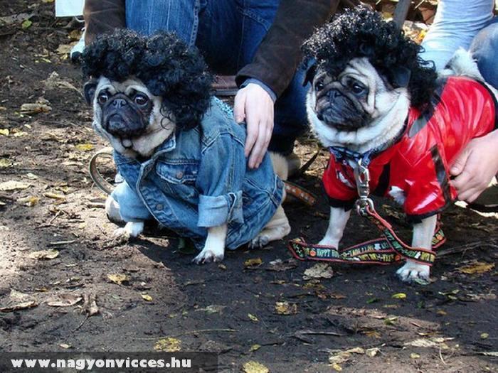 Különös öltözet kutyáknak