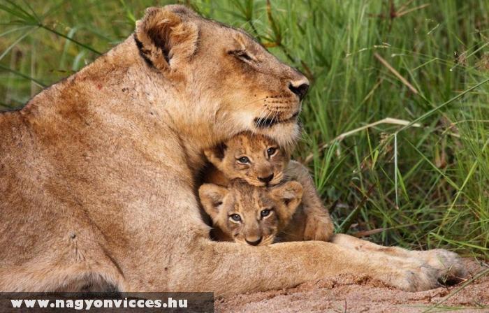 Anyai szeretet !