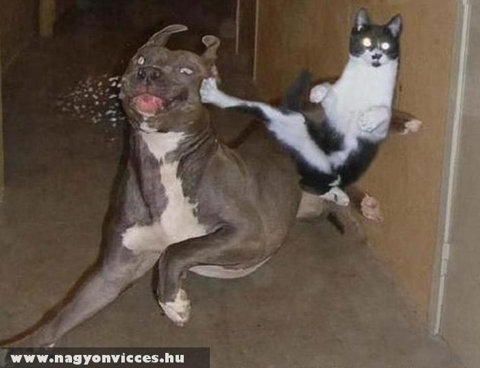 Cica kung-fu