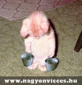 Szorgos kis cica