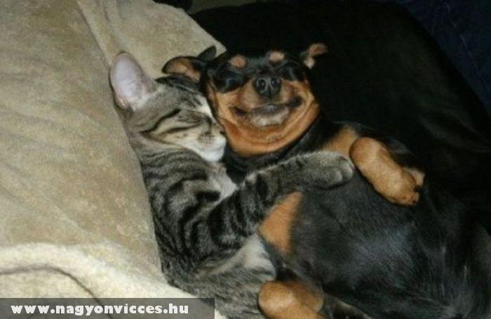 Szerelmes állatok :)