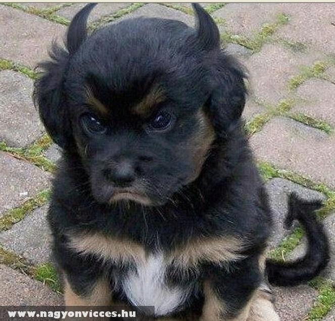 Morci kutyó