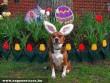 Húsvéti nyuszi híján húsvéti kutyus