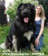 Óriás kutyó