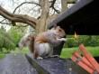 Terrorista mókus