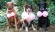 Esküvői kutya ruha :)