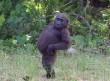 Pózoló majom