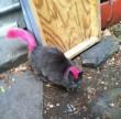 Punk cica