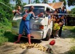 Superman megmenti a kiskacsákat