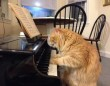 Zongorázó macsek