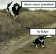 Eltévedt tehén