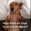 Nem az én ágyam?