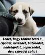A kutya...